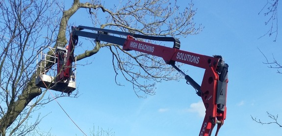 Tracked spider cherrypicker in garden assisting tree surgeon with dangerous tree overhanging livestock pens.