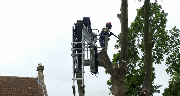 Tracked spider cherry picker in rough terrain helping tree surgeon to dismantle a dangerous tree.