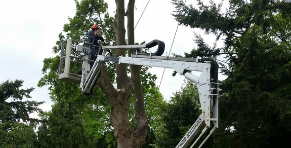 Tracked spider cherrypicker helping arborist to dismantle dangerous tree.